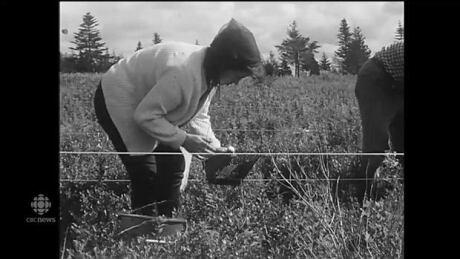Blueberry Picking Kitchener Waterloo