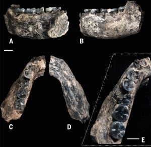 Fossil Jaw
