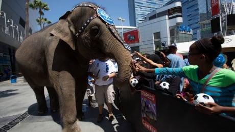 Elephant Ringling Bros.