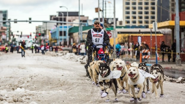 Musher Chuck Schaeffer and his team charge down Anchorage's 4th Avenue during the ceremonial start of the Iditarod sled dog race in Anchorage in March 2015. Low snow in the Anchorage area may cause havoc for this year's ceremonial start on March 5, and the race's board of directors will decide Friday whether the race will have its official start March 6 in Willow or Fairbanks.
