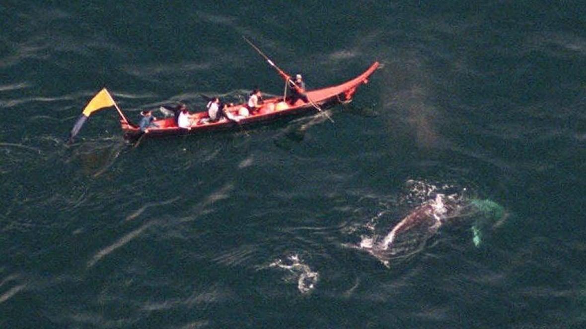 Information on makah tribal whale hunt :: noaa fisheries