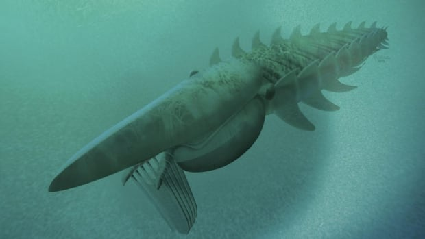 An artist's rendering of the anomalocaridid (Aegirocassis benmoulae), a giant filter-feeder that lived in the Early Odivician period approximately 480 million years ago.
