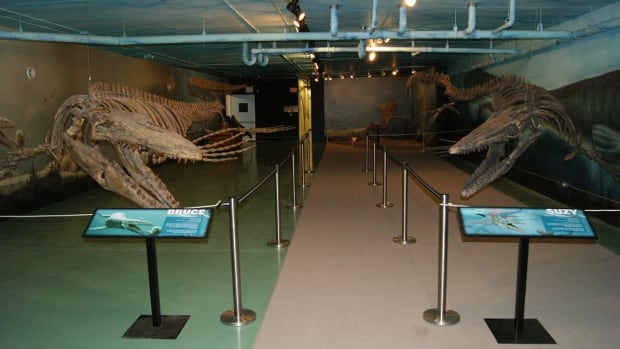 suzy-bruce-mosasaur.png