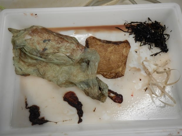Several plastic items were found in the whale's stomach.
