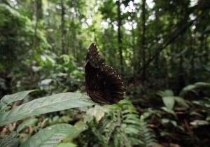 Ecuador Amazon Oil
