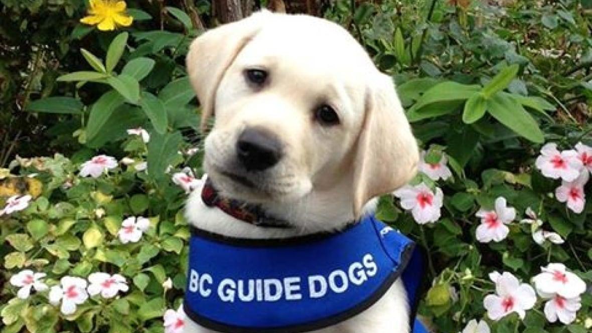 Service Dog Training Saskatchewan