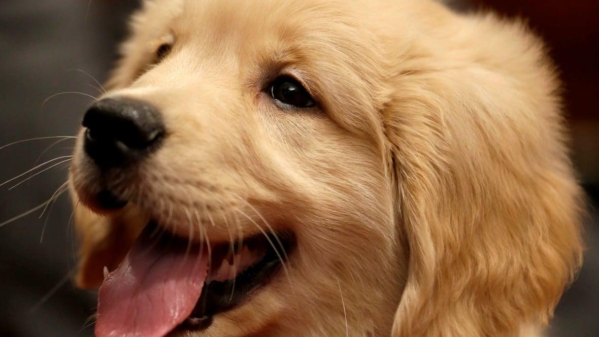dog - photo #45