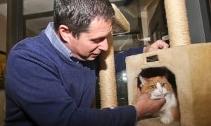 Pets Cat Talk