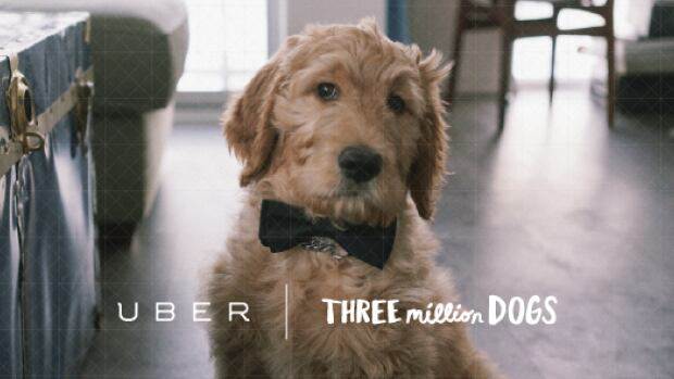 Uber will deliver dogs to offices on Thursday. It's unclear why the dog above is wearing a bow tie.