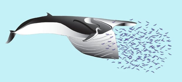 Whale graphic