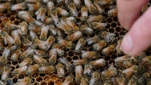 rooftop bees