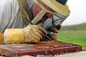 Dying Bees Insecticides