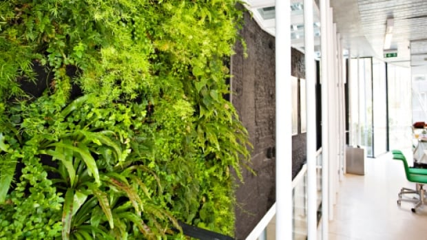 Indoor living walls are part of the shift towards biophilic design.