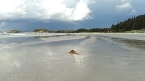 Low tide at Western Beach by Donna Warren