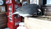 Tiniest pub in Newfoundland has gone to the birds — literally