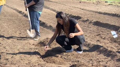 Aboriginal, immigrant students plant Saskatoon community garden