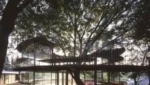 Fuji Kindergarten - Ring Around the Tree