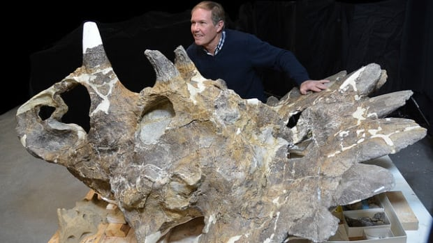 Peter Hews poses with the unique dinosaur skull called Hellboy, which is now on display at the Royal Tyrrell Museum in Alberta.
