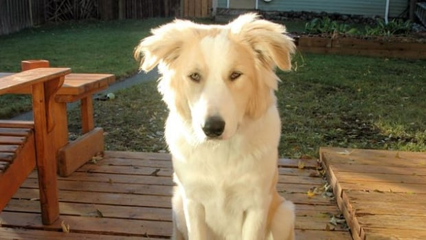 Harvey was rescued in Kuwait and now lives in Kamloops with Scott Quibell.