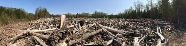 Gaspe log pile St-Jean River