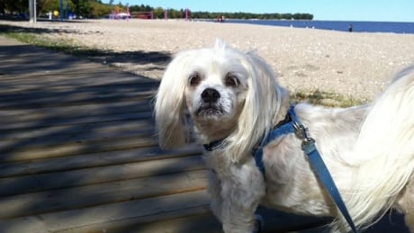 how to get fido manitoba plan