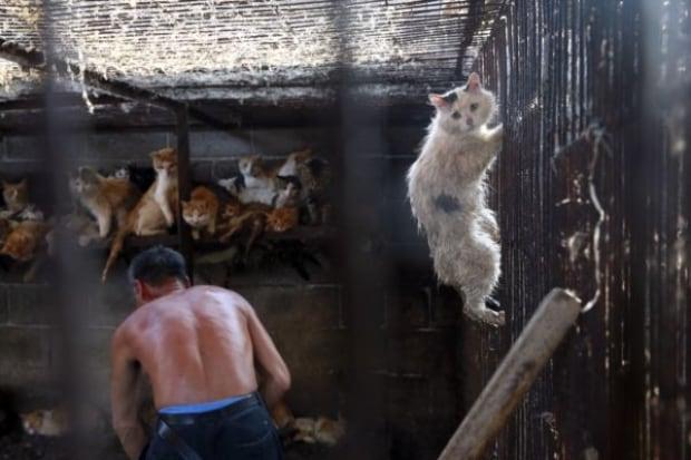 Cats at Yulin dog festival