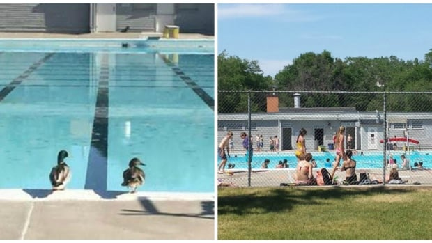 Wascana pool open for the summer saskatchewan cbc news for Opening pool for summer