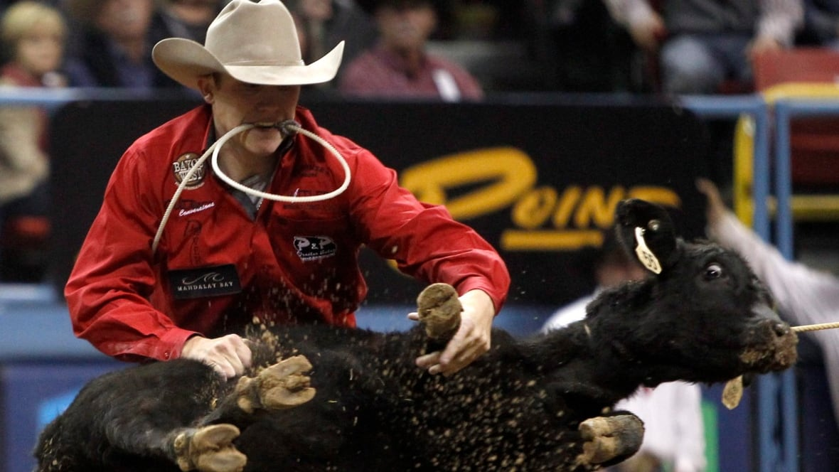 Calgary Stampede Tie Down Roping Marty Yates A Competitor