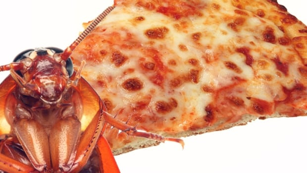 Cockroach pizza is off the menu after a shipment of dead insects didn't make it to Canada.