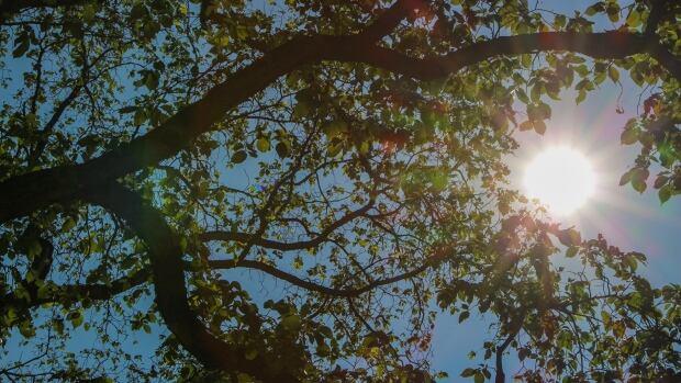 Sunny sky in Winnipeg