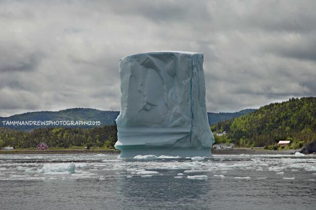 Iceberg near Nicky's Nose Cove