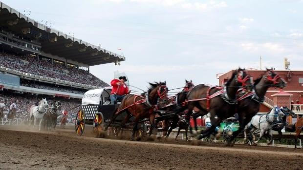 4 Calgary Stampede Horses Die In 2015 Chuckwagon Races