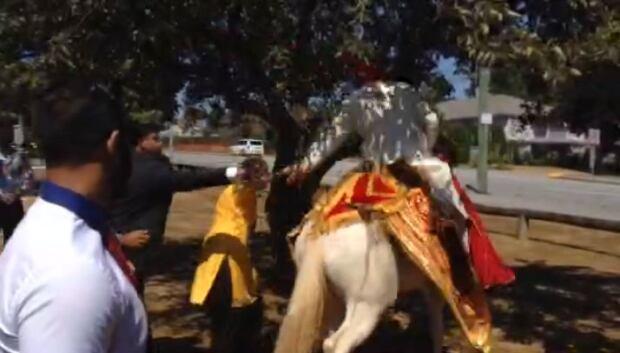 Groom falls off horse at wedding