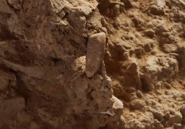 Tooth caune de l'arago