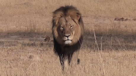 Air Canada bans African animal trophies as freight
