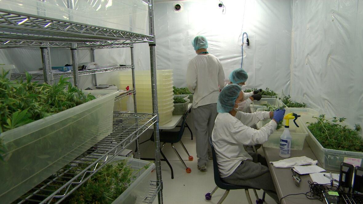 Delta 9 Manitoba Medical Marijuana Facility Offers