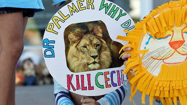 Piper Hoppe, 10, from Minnetonka, Minn., holds a sign at the doorway of River Bluff Dental clinic in protest against the killing of Cecil, a famous lion in Zimbabwe. Protesters have made a pilgrimage to dentist Walter Palmer's clinic and pilloried him on social media over the trophy hunt.