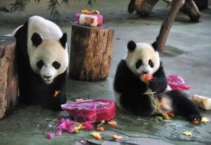 Yuan Yuan and Yuan Zai