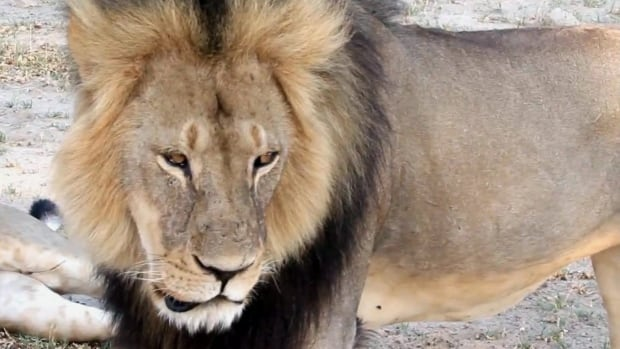 The killing of Cecil the lion in Zimbabwe sparked a fierce debate about trophy hunting in Africa last summer.