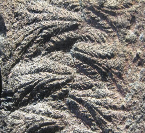 Fractofusus close up