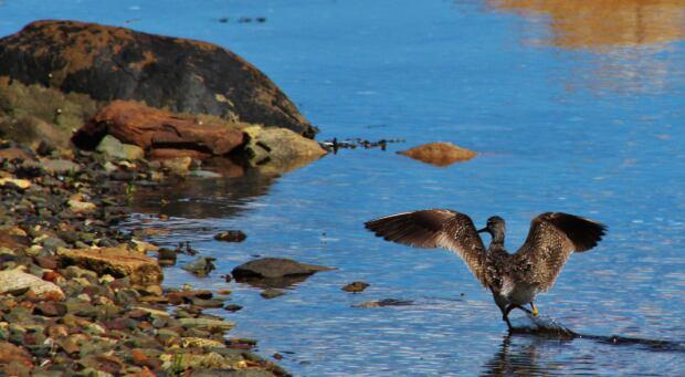 Beachy bird by Ronald O'Toole
