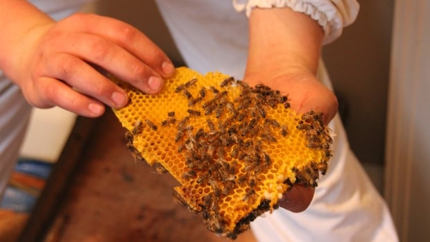 City council approves urban beekeeping in downtown Winnipeg.