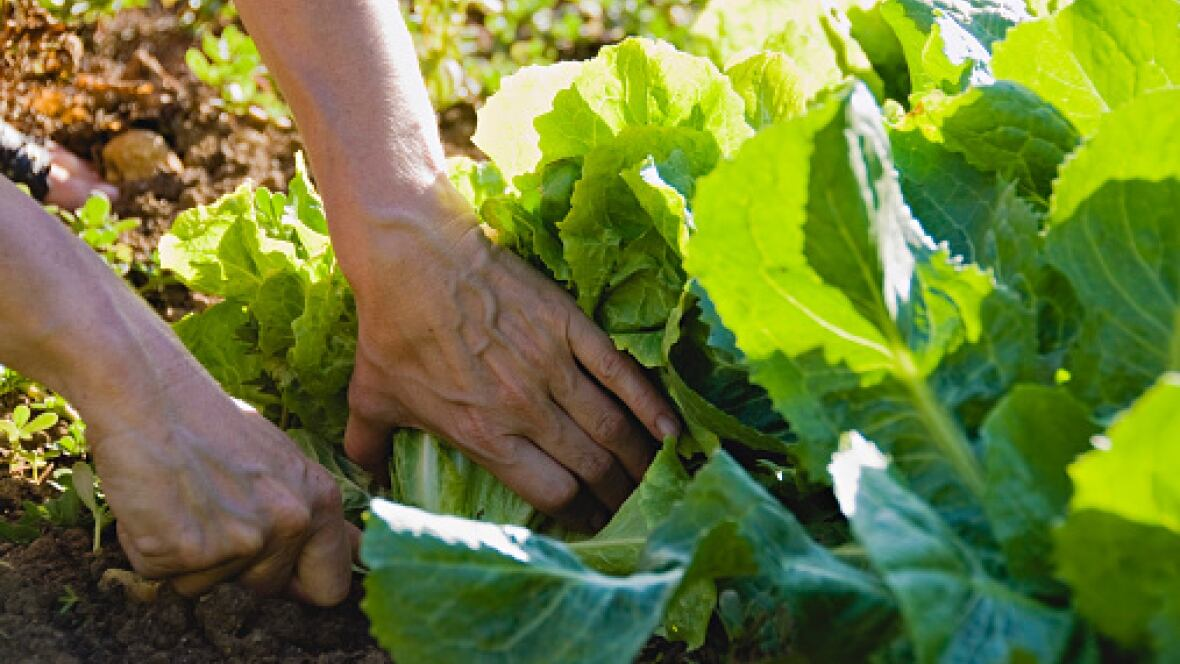 Vegetable gardening during a drought 5 tips from a pro for Canadian gardening tips