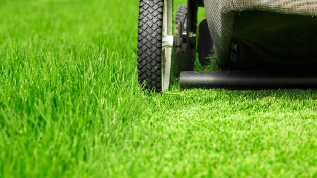 Grass-cutting robots are common in some European countries. Their use in North America has been held up by regulatory speed bumps.