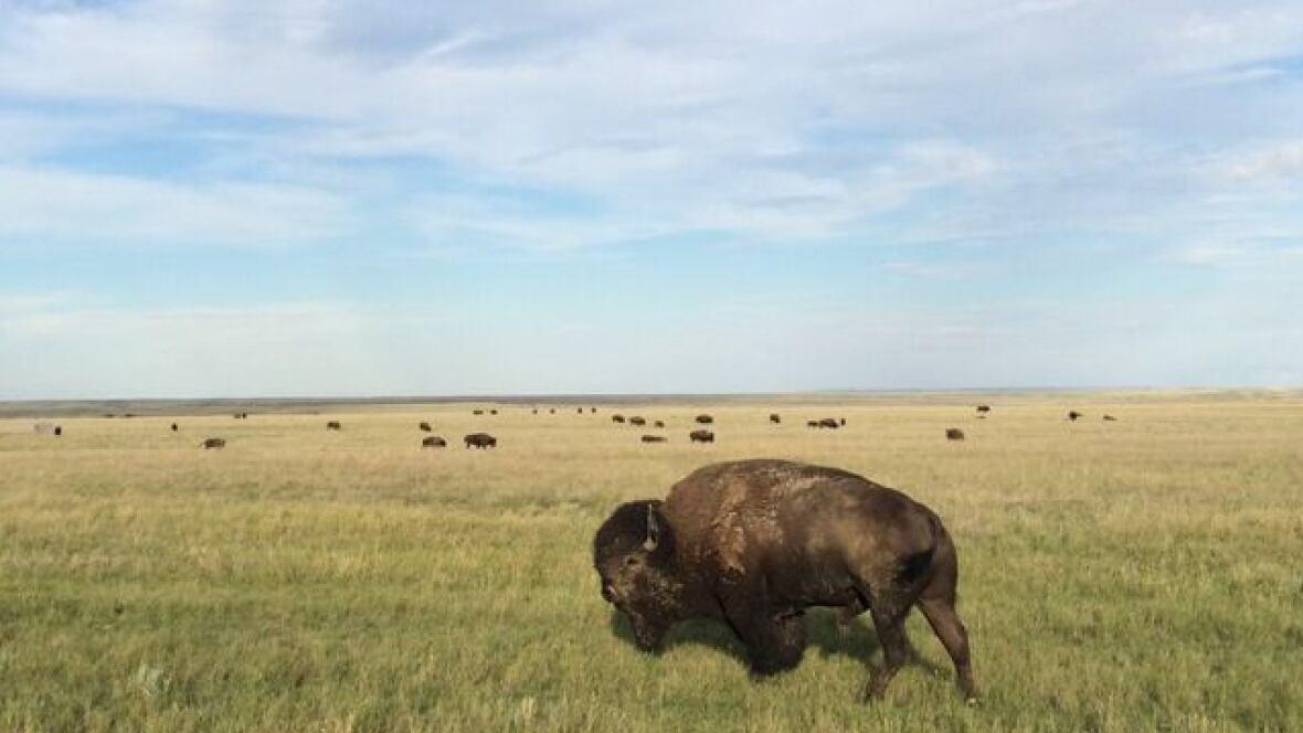 buffalo prairie single parents Build a frank lloyd wright-inspired dream home home plans for prairie, usonian, and other frank lloyd wright inspirations.