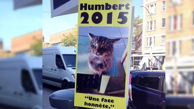 "Humbert, the four-year-old tabby, is running under slogans including: ""An honest face,"" ""The time is now,"" and ""Let's keep the box clean."""