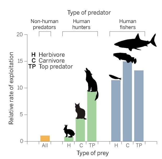 Humans as predators