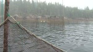 Weir fishing