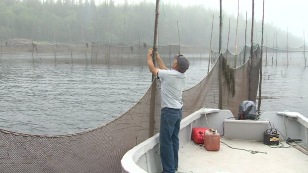 Dan Cunningham used to have two weirs along the Fundy Isles. Now he only has one.
