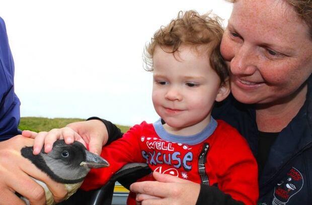 Witless Bay puffin patrol 2015 02